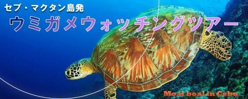 セブ島ウミガメツアー、モアルボアル海亀